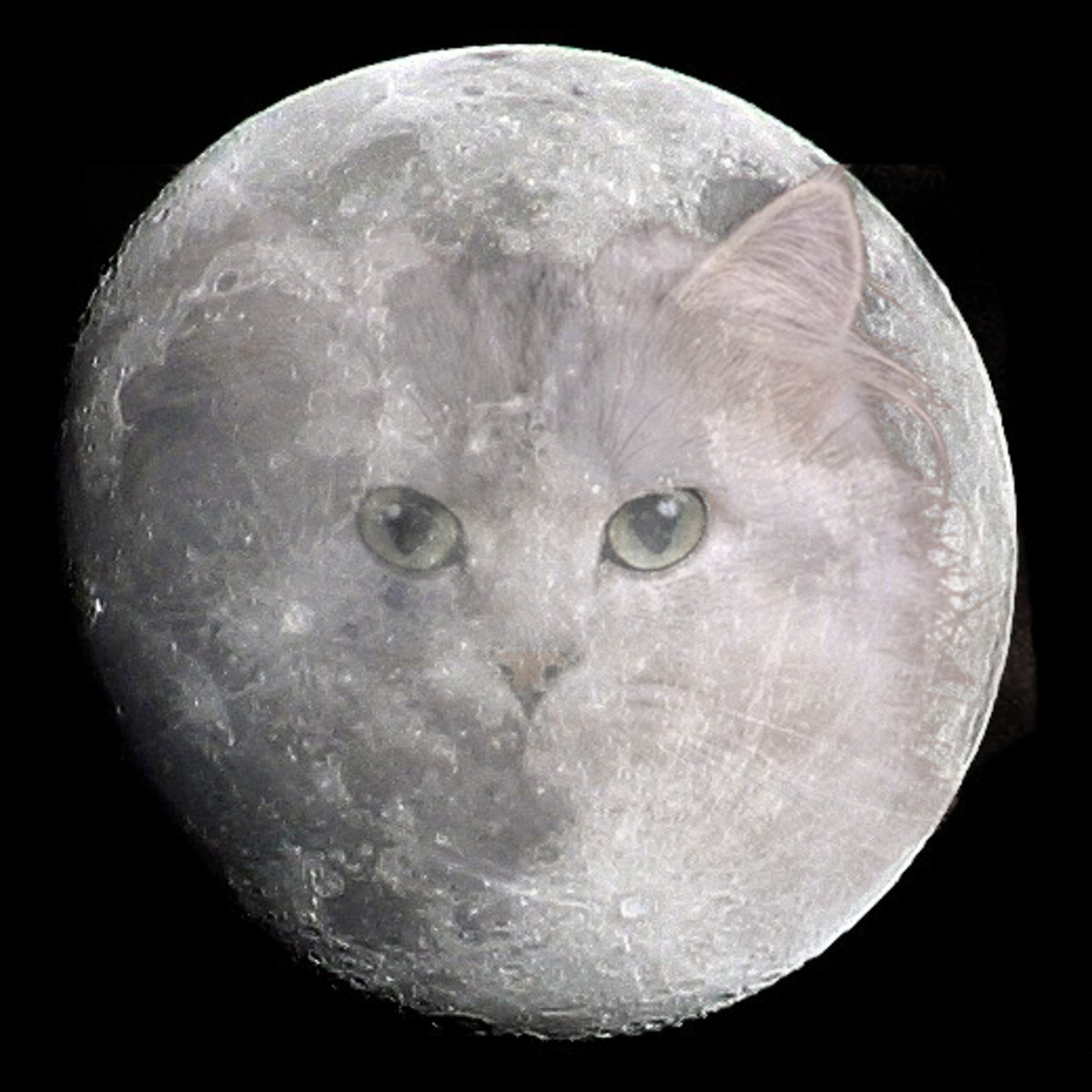Moon Cat is watching you!