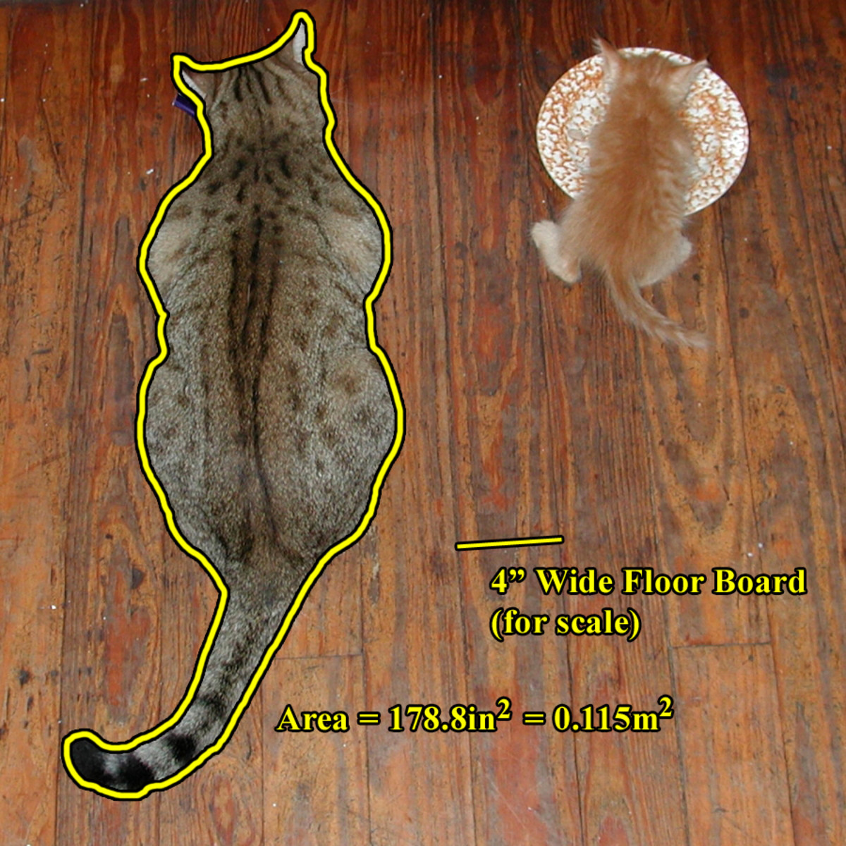 cat-mathematics-how-many-cats-does-it-take