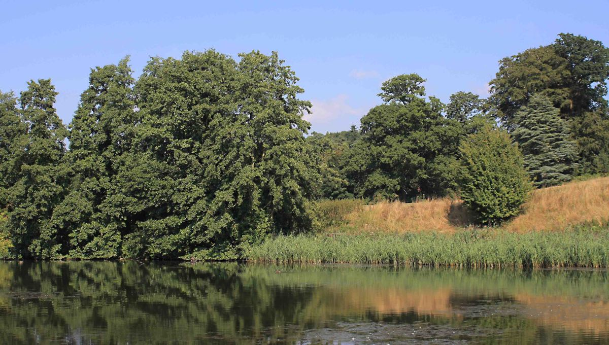 Tranquil scene in the Leeds Castle grounds