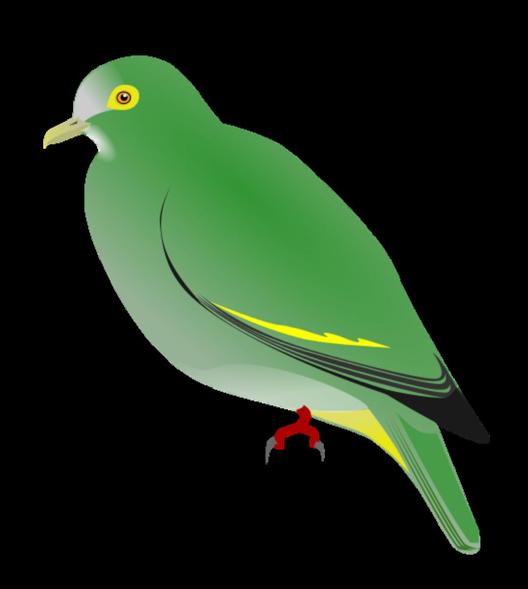 Negros Fruit Dove (Ptilinopus arcanus)