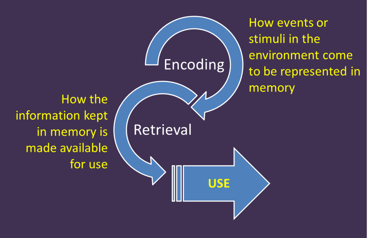 An infographic of our memory and encoding cognitive processes