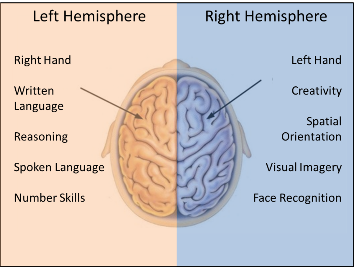 Hemispheres of the brain and the functions they support. Note the right hemisphere supports the left side of the body and the left hemisphere the right side of the body