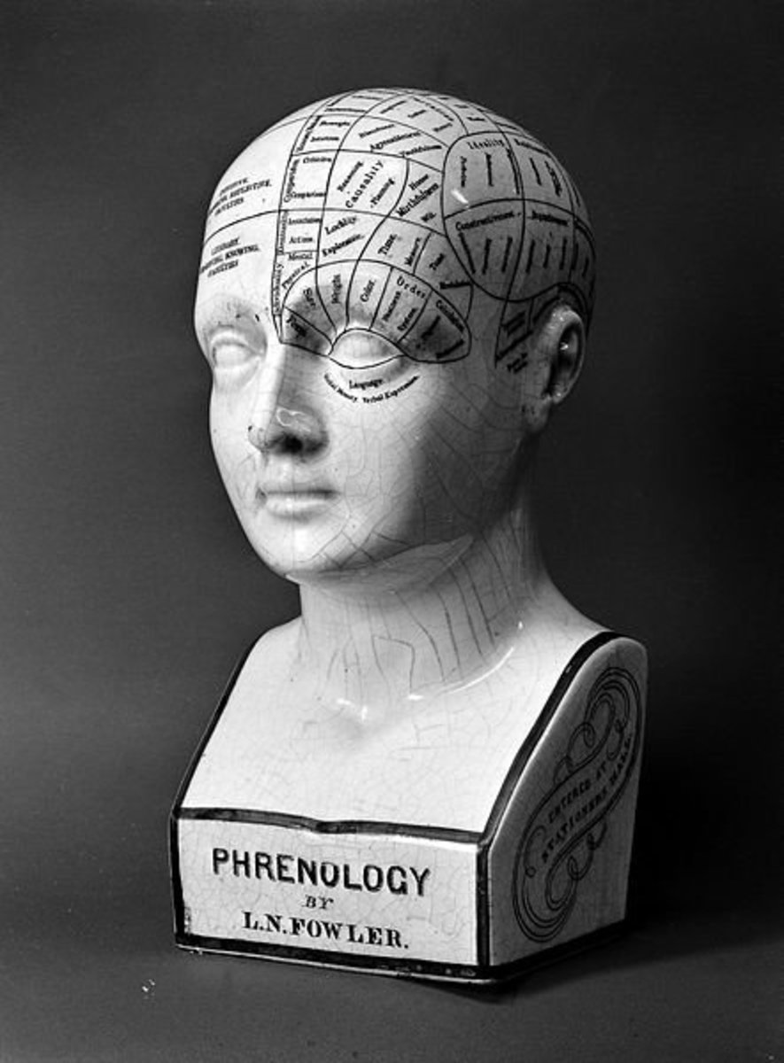 A phrenology ceramic head