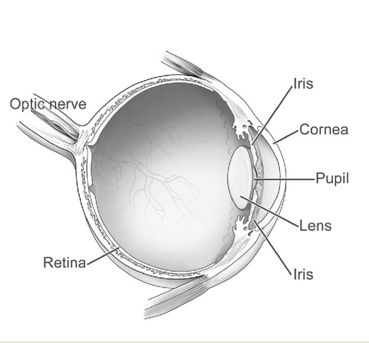 Diagram of the Eye