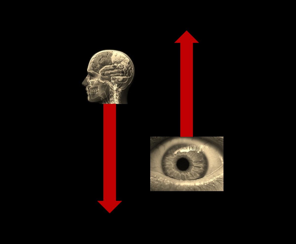 Models of Visual Processing