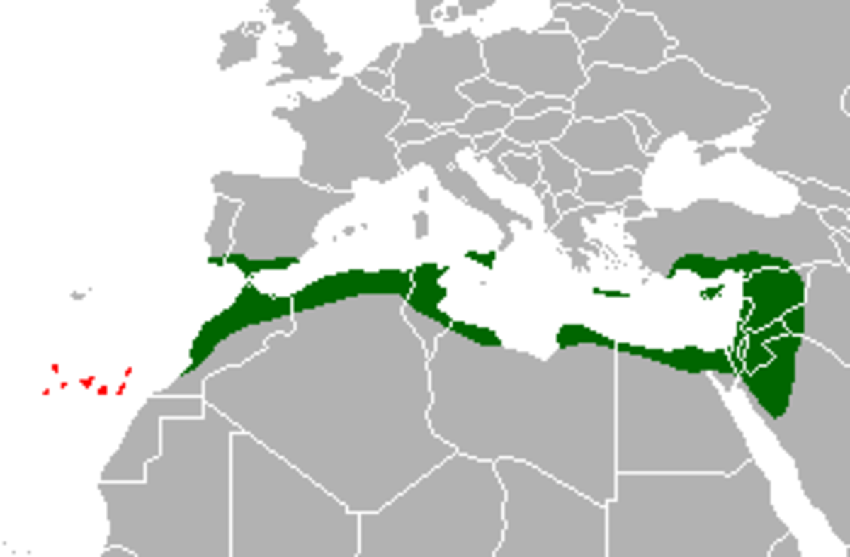Map of the common chameleon's distribution.