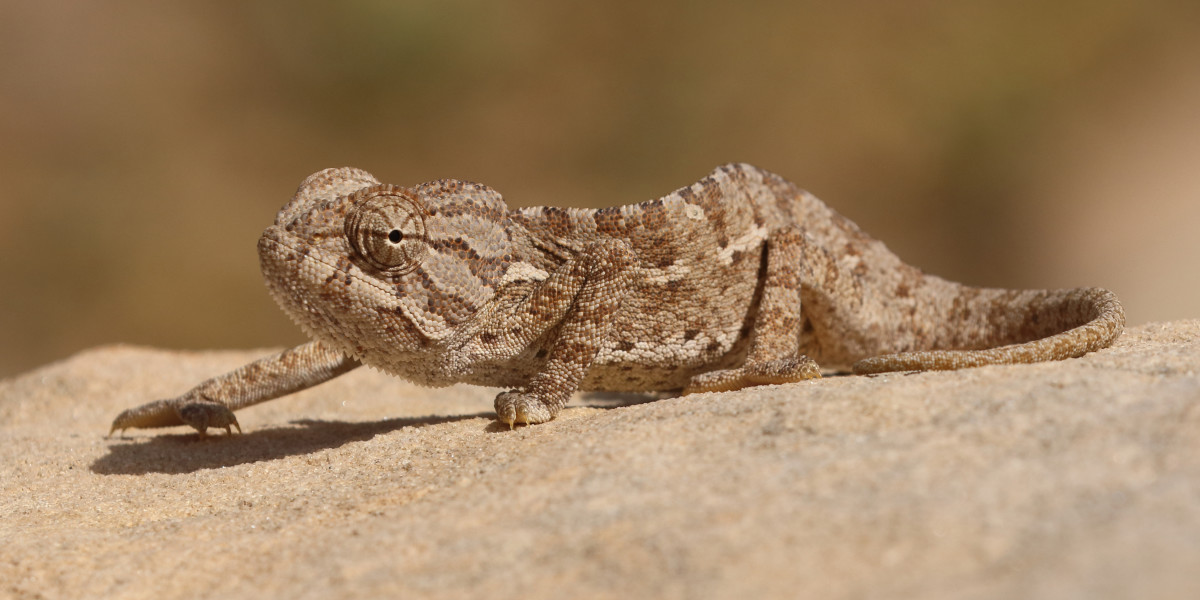 An example of a light, sandy brown colouration.