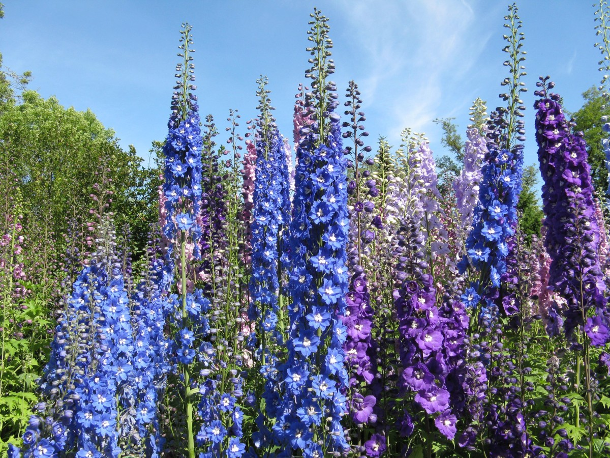 The children read about delphiniums in a gardening book and decide to plant them in the secret garden.