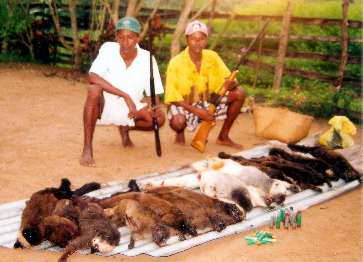 Bushmeat hunters very likely carried HIV from apes to humans