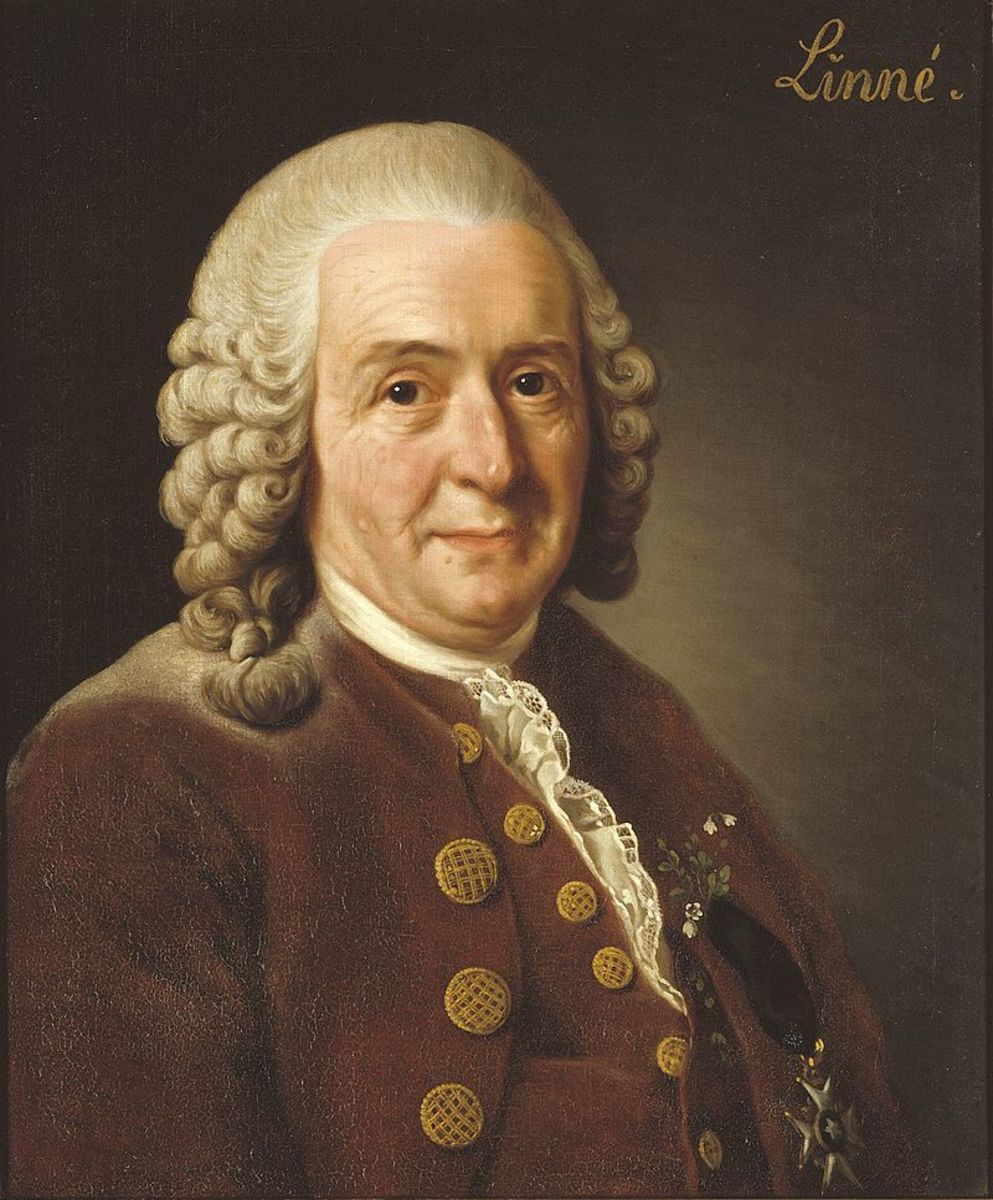 Portait of Carl Linnaeus (also known as Carl von Linne). This portrait was done by Alexander Roslin in 1775. Carl was an 18th century Swedish scientist, who devised a classification for plants and animals using descriptive Latin words.