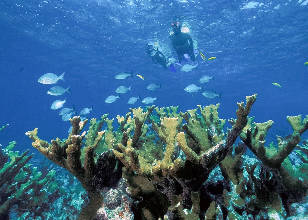 Elkhart coral in Biscayne National Park in Florida