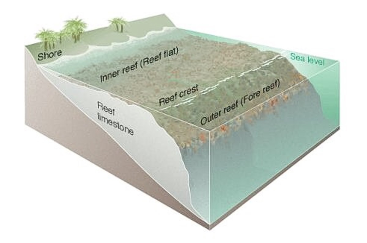 Structure of a coral reef