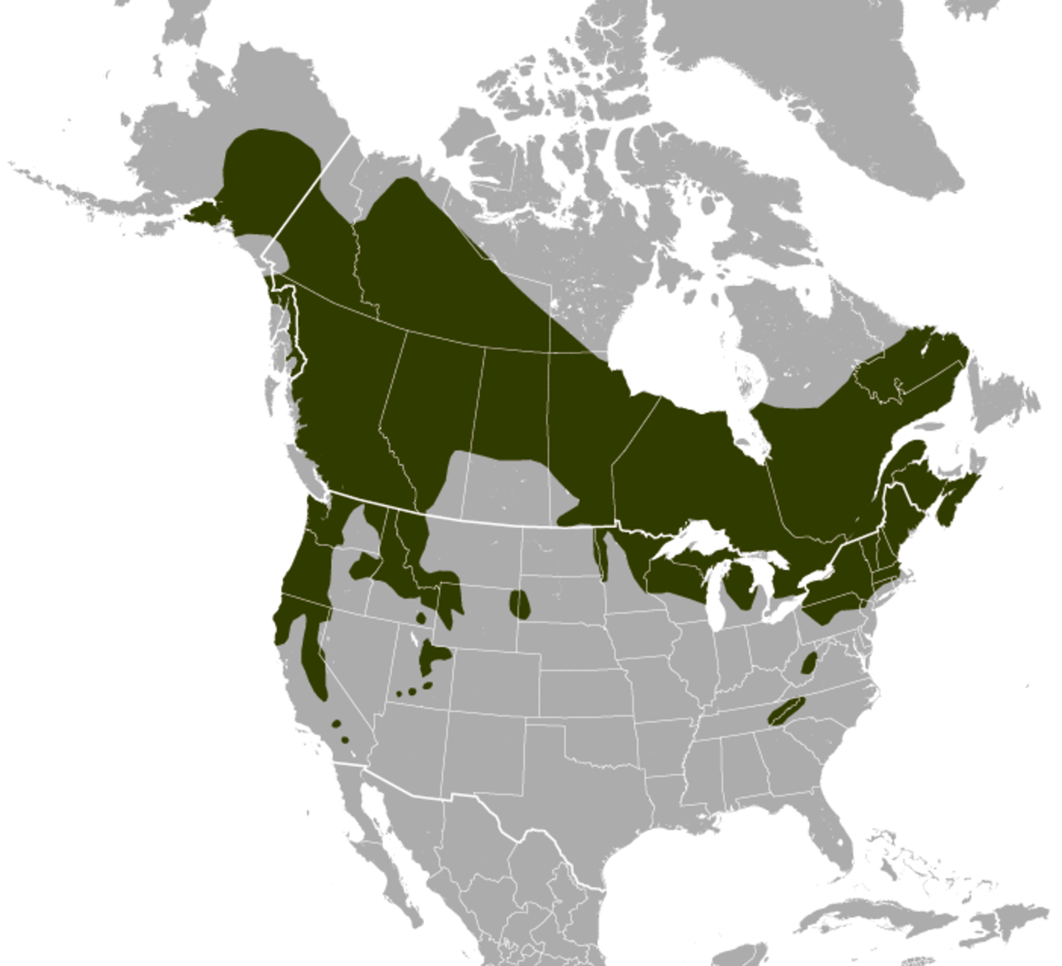 Where to find a northern flying squirrel.
