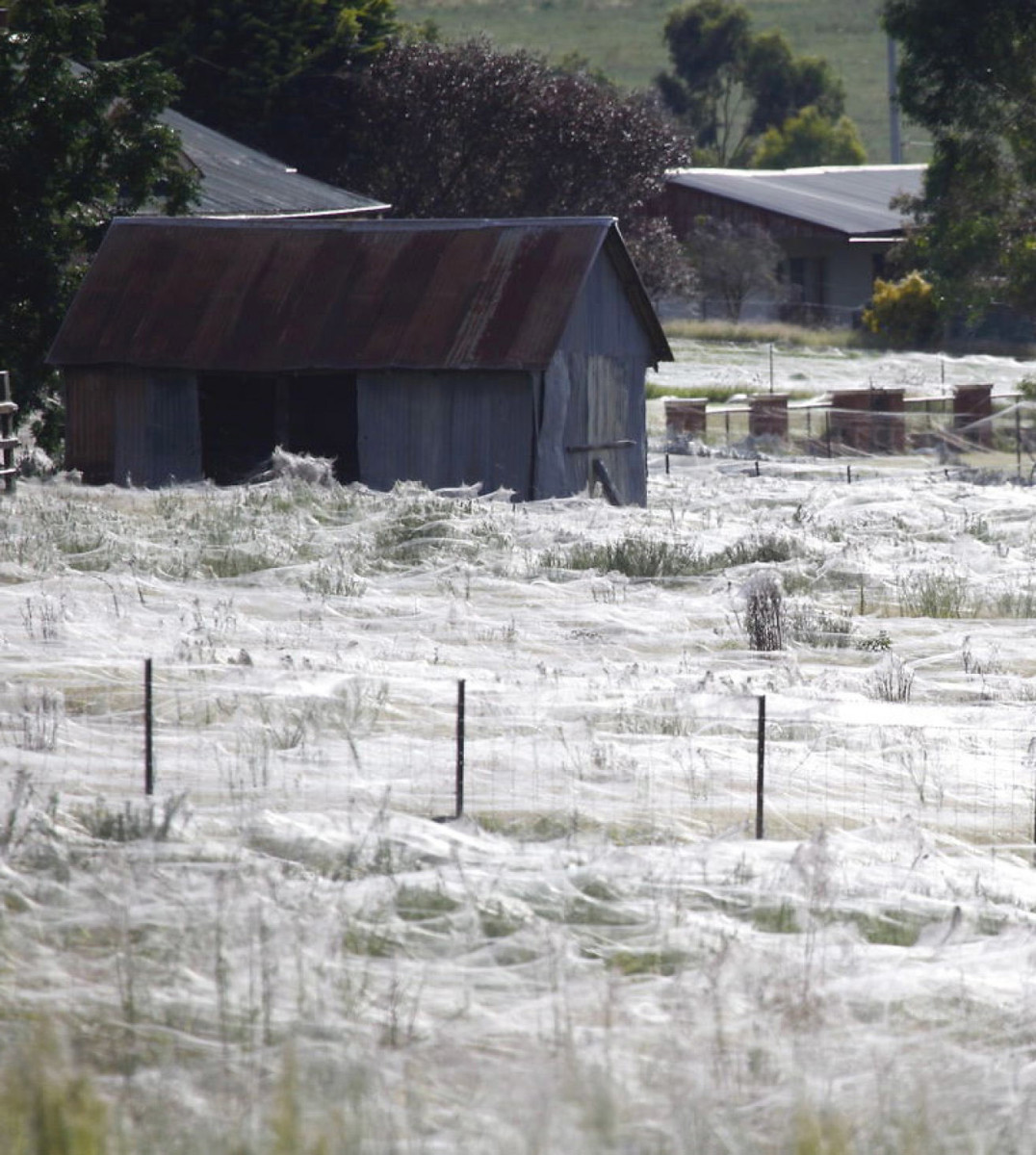 Web-covered field