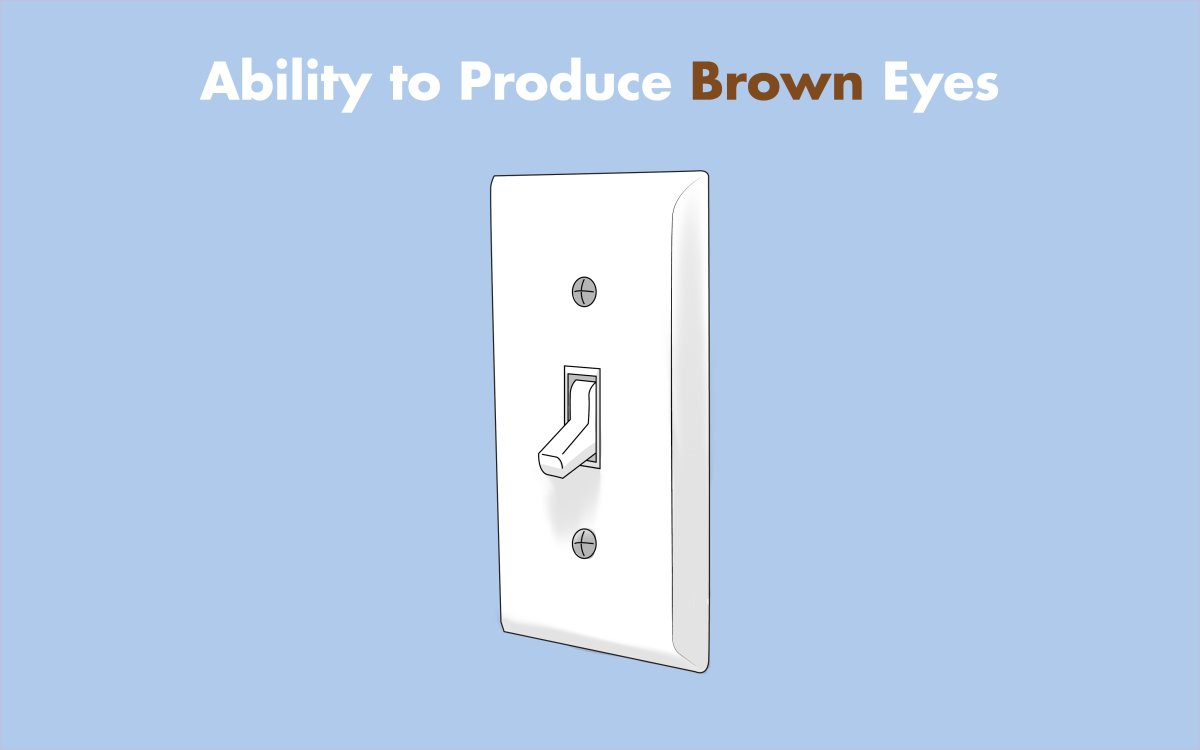 People with blue eyes are affected by a genetic mutation that turns off their ability to produce brown eyes.