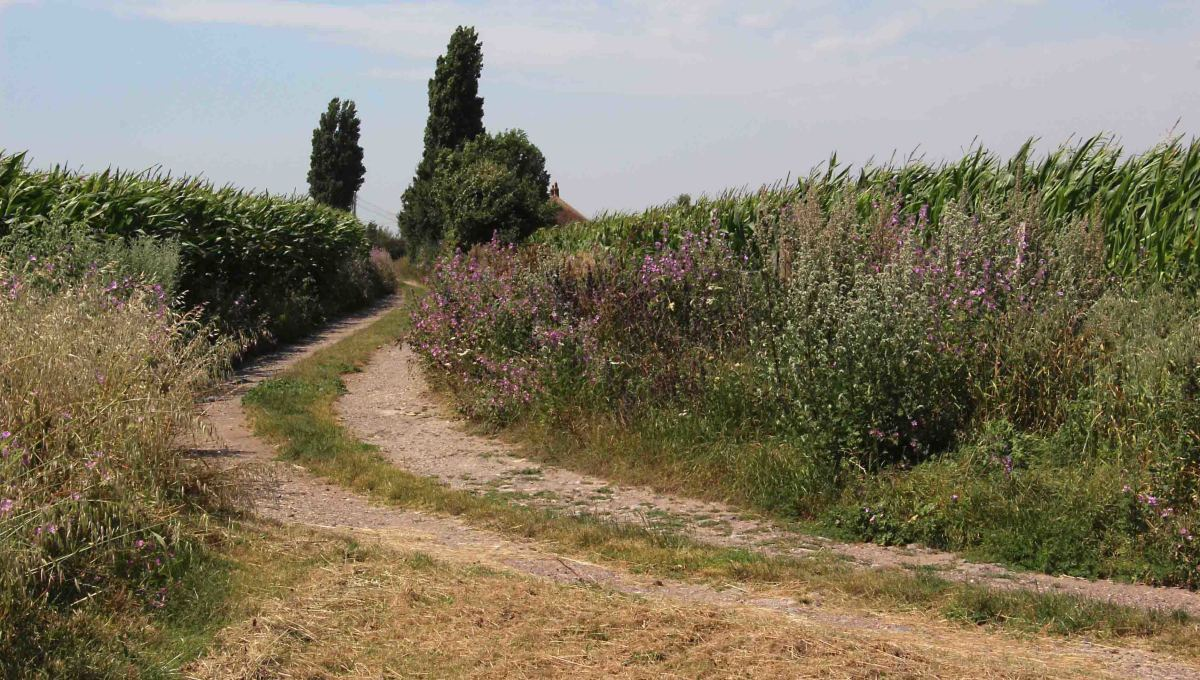 The dirt track leading away from the bend and between the trees was once the very beginnings of Watling Street