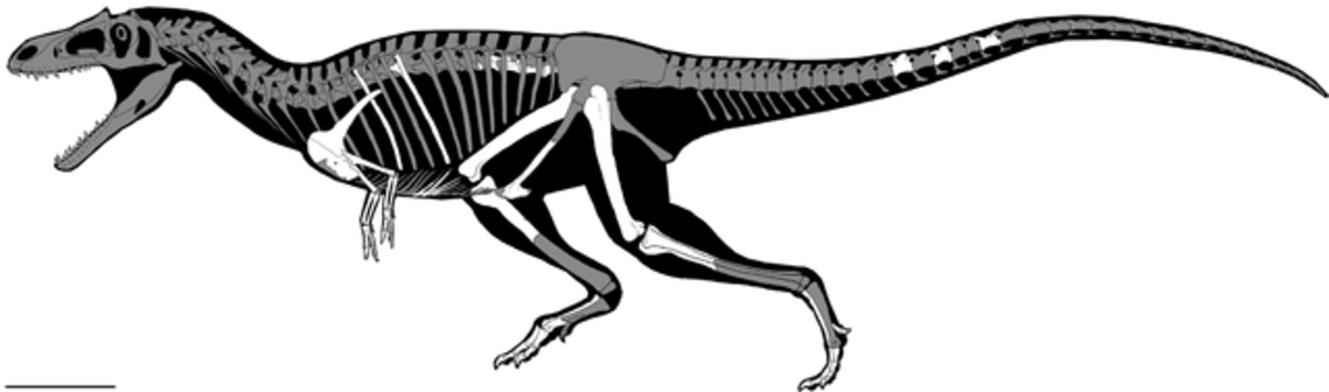 Known remains and projected anatomy of Gualicho, by Jorge A. Gonzalez.