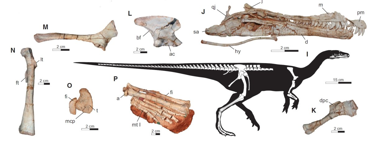 Projected Buriolestes anatomy by Cabreira et al.