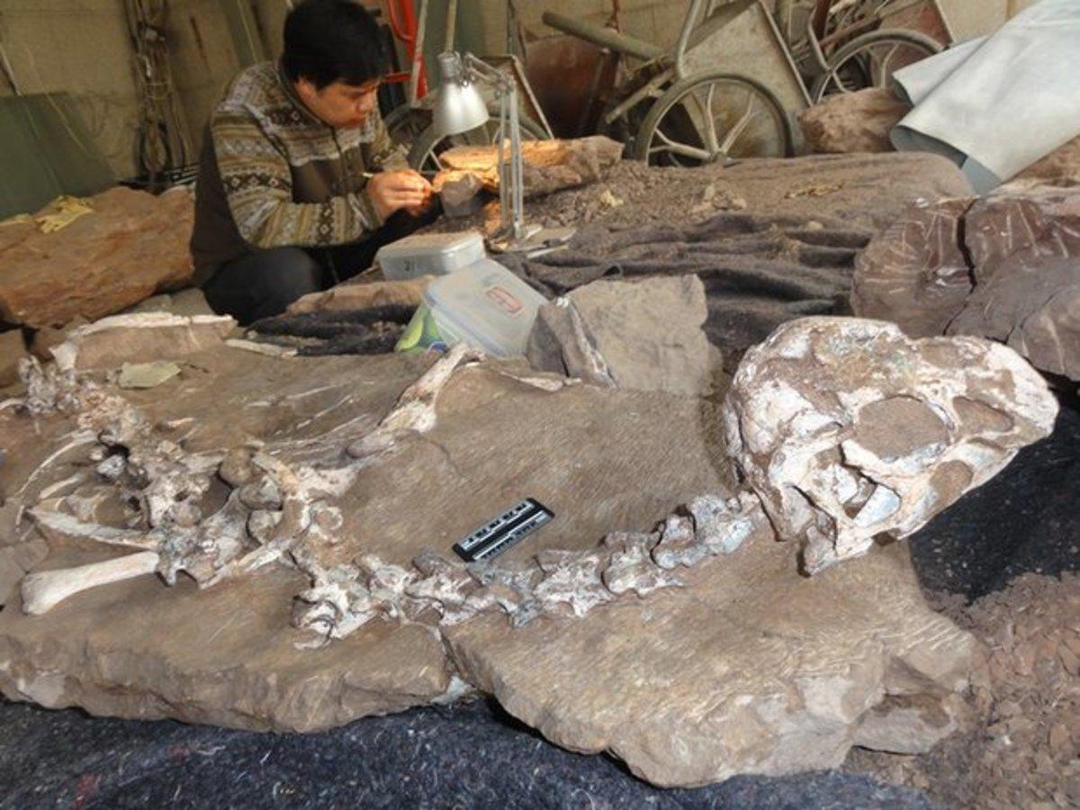 Tongtianlong alongside a fossil conservator.