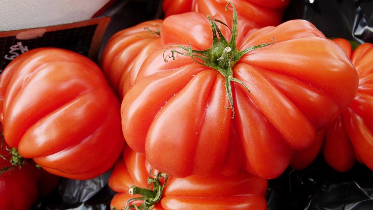 A Costoluto Genovese tomato