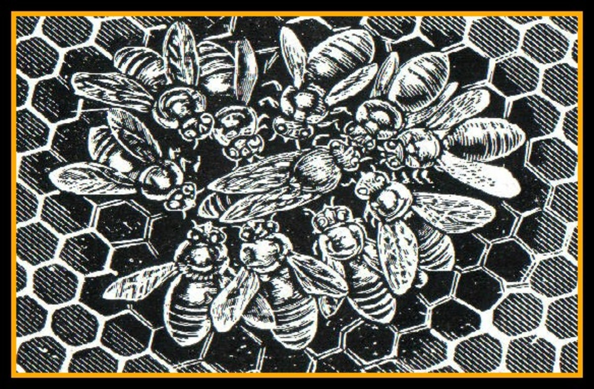 "The queen bee reigns is surrounded by her ""court"". The bees form a circle around her to protect her."