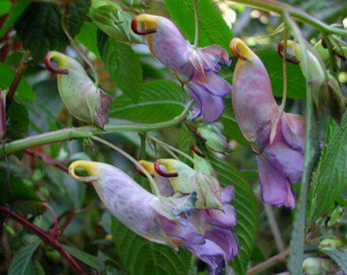 Gorgeous parrot flowers.