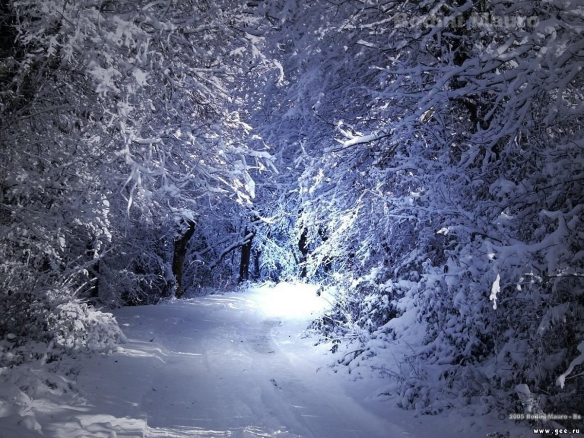 poems-on-winter-agony