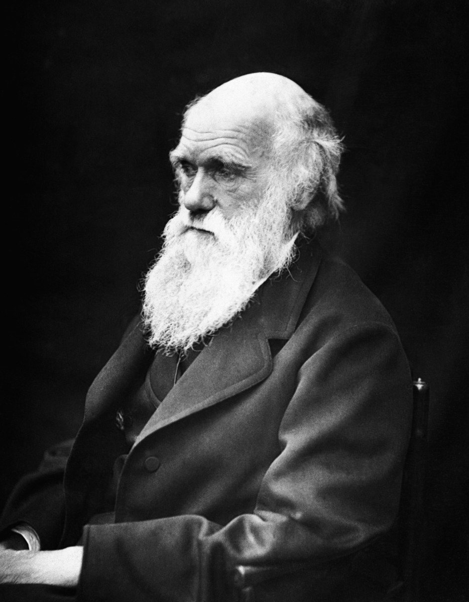 A photograph  of Charles Darwin by Julia Margaret Cameron taken in 1868.