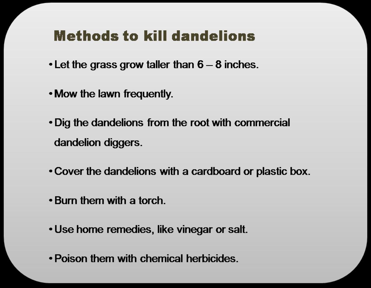 dandelions-in-parallel-universes