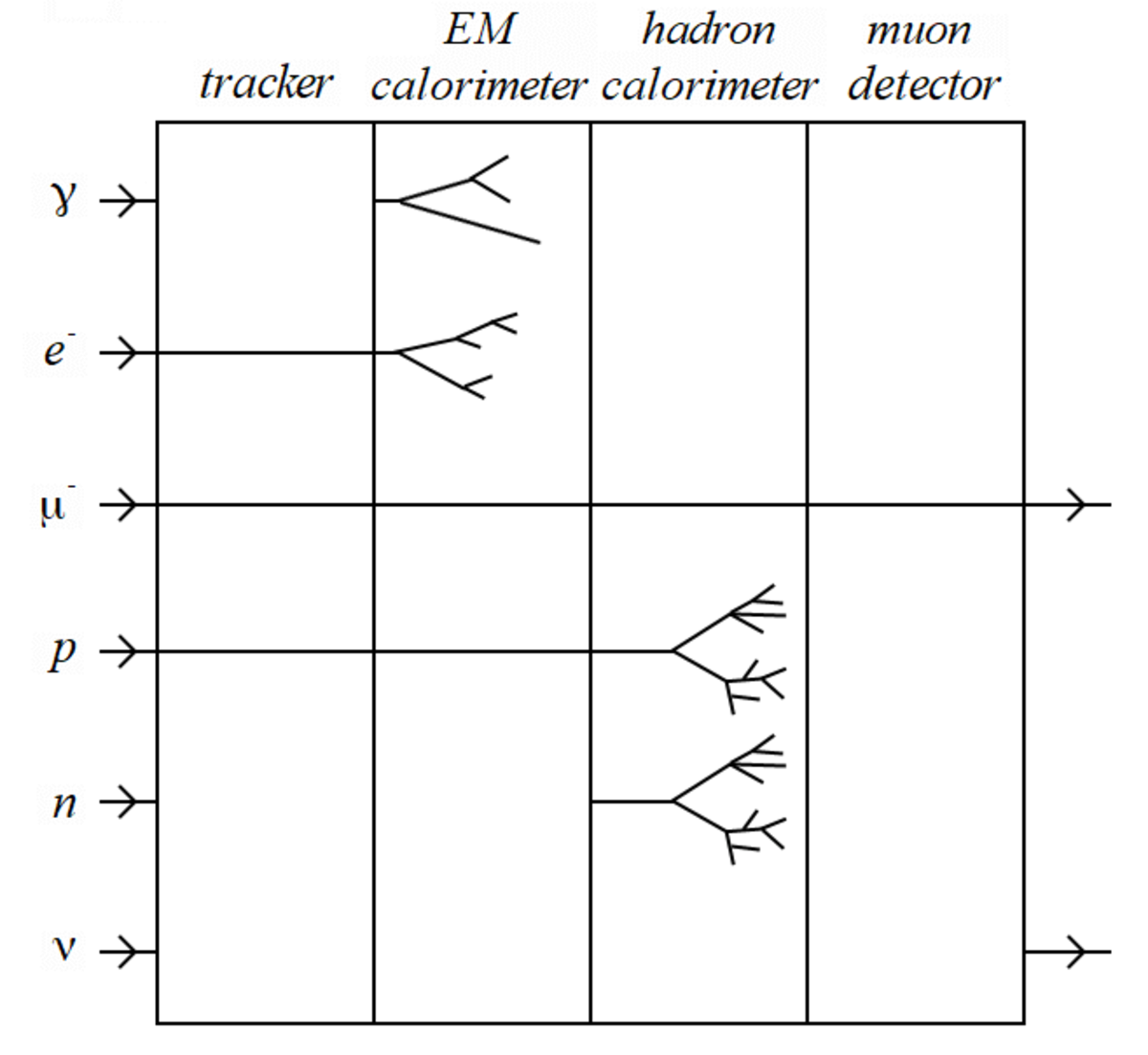 A schematic showing the layers of a typical modern particle detector and examples of how it detects common particles.