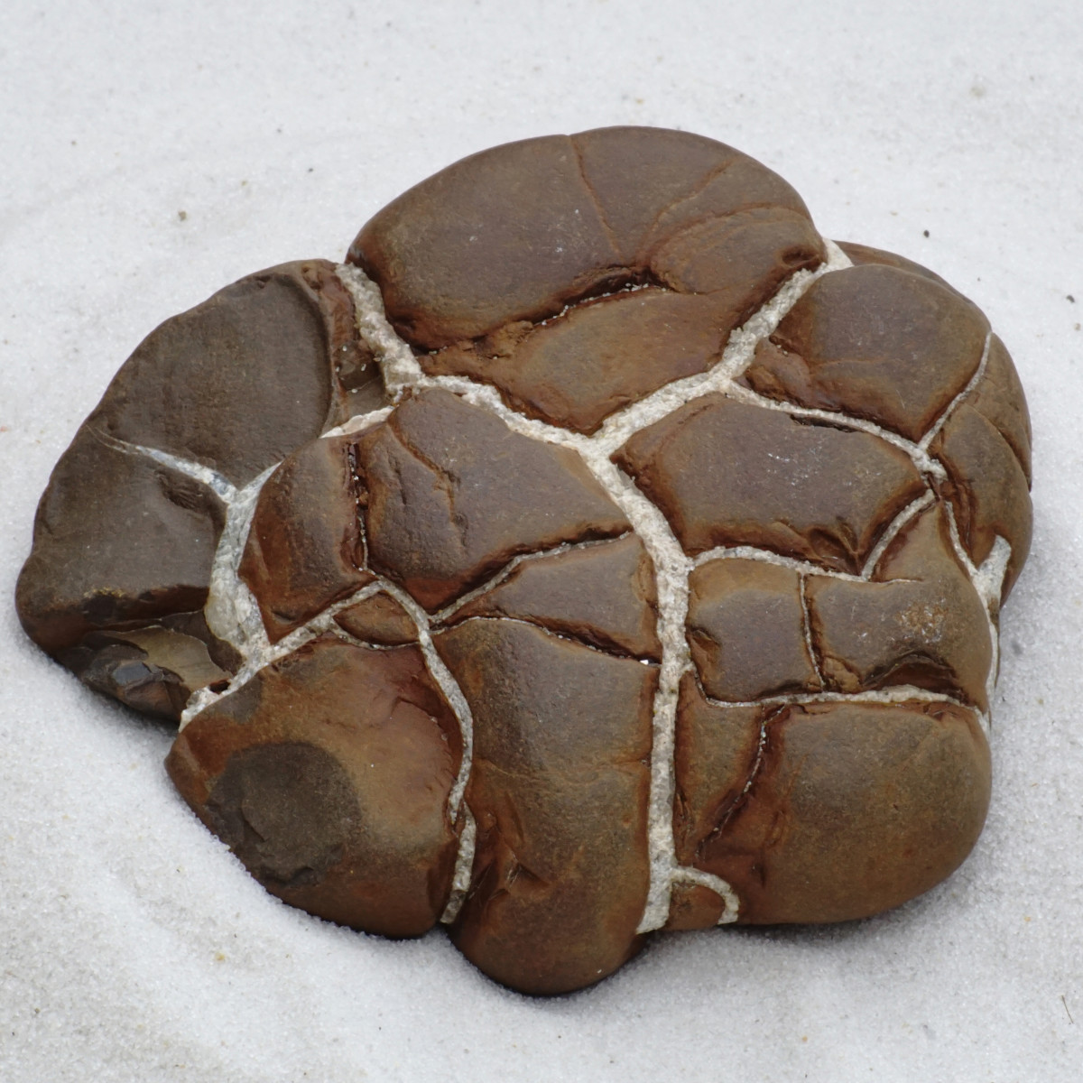 Septarian Brown Stone - Lake Michigan Beach Stone