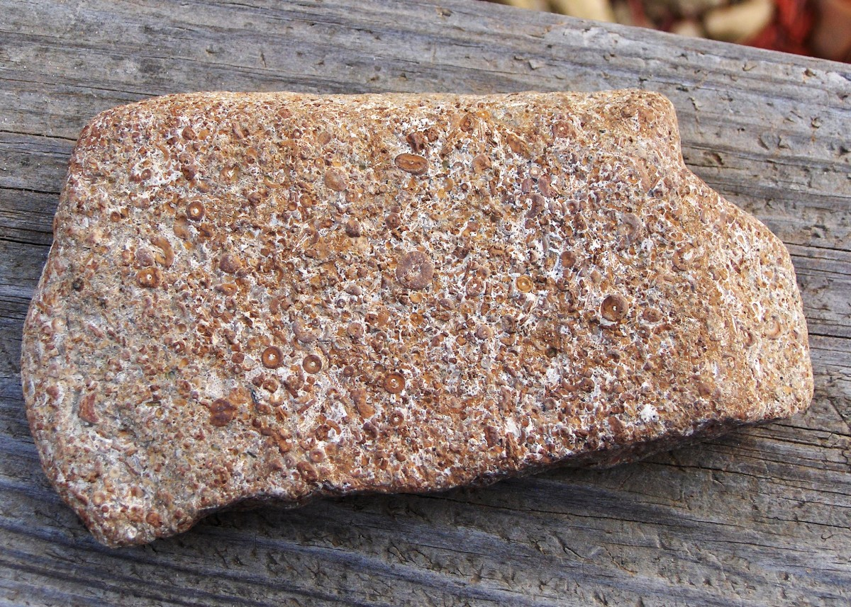 Fossiliferous Limestone - Lake Michigan Beach Stones