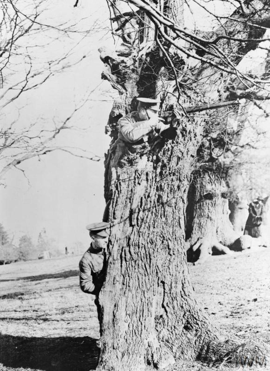 British soldiers practice sniping from a tree in Richmond Park, London. In Flanders they would find that trees were no more than shattered sticks.