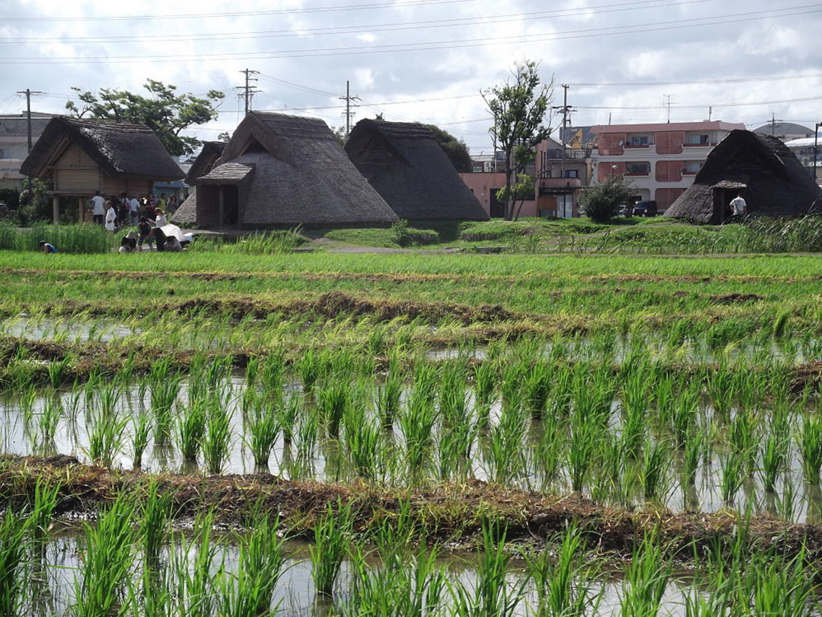 The Toro site in Japan, proudly displaying its rice paddies.
