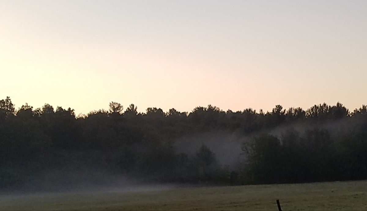 The mist over the field seems dreamy, and our dreams may be both beautiful and informative.  They are gifts from our Shadow selves to help us heal.