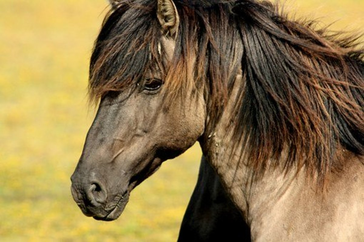 This shaggy horse could make a good Fengfeng.