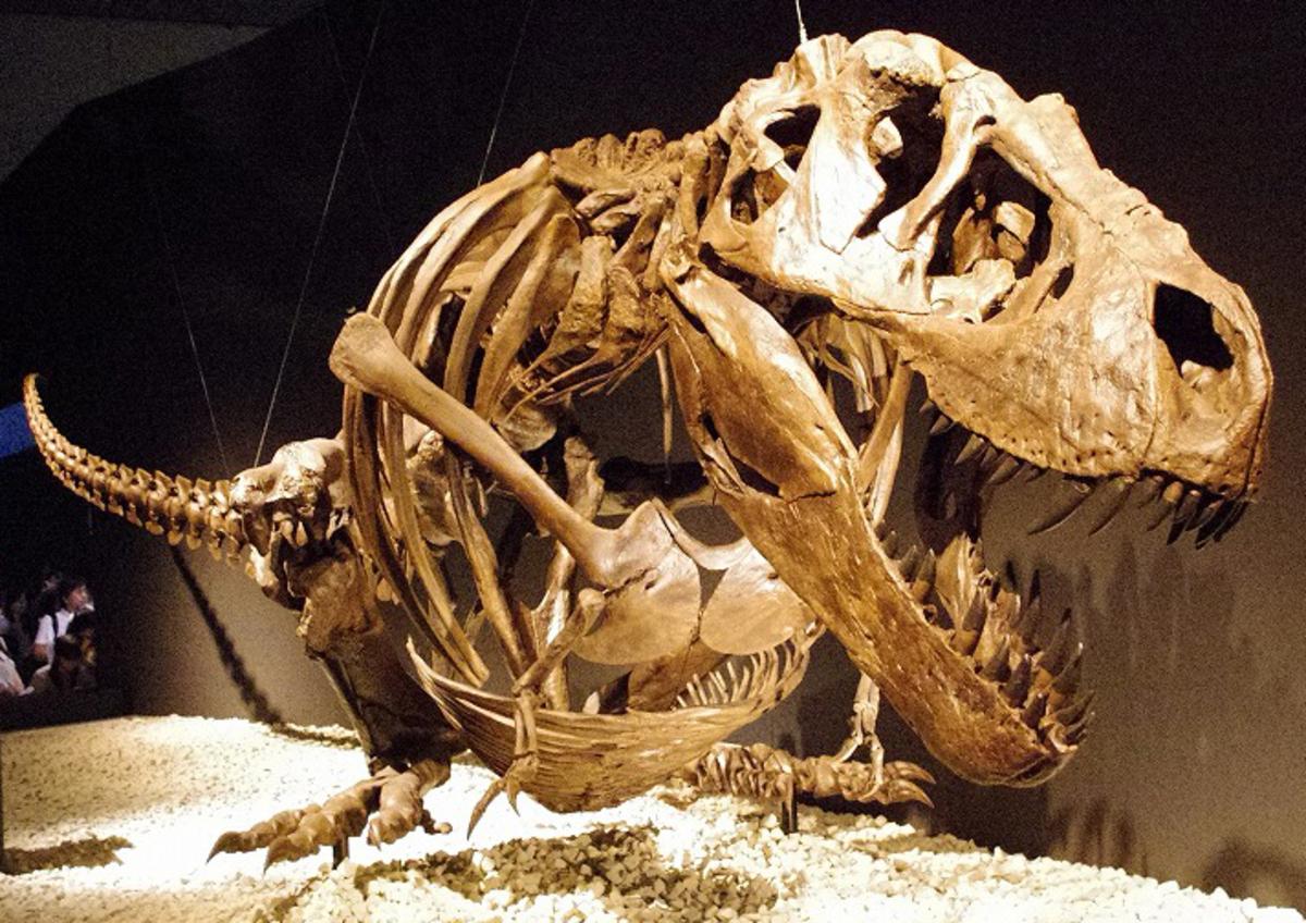 A T-Rex skeleton resting.