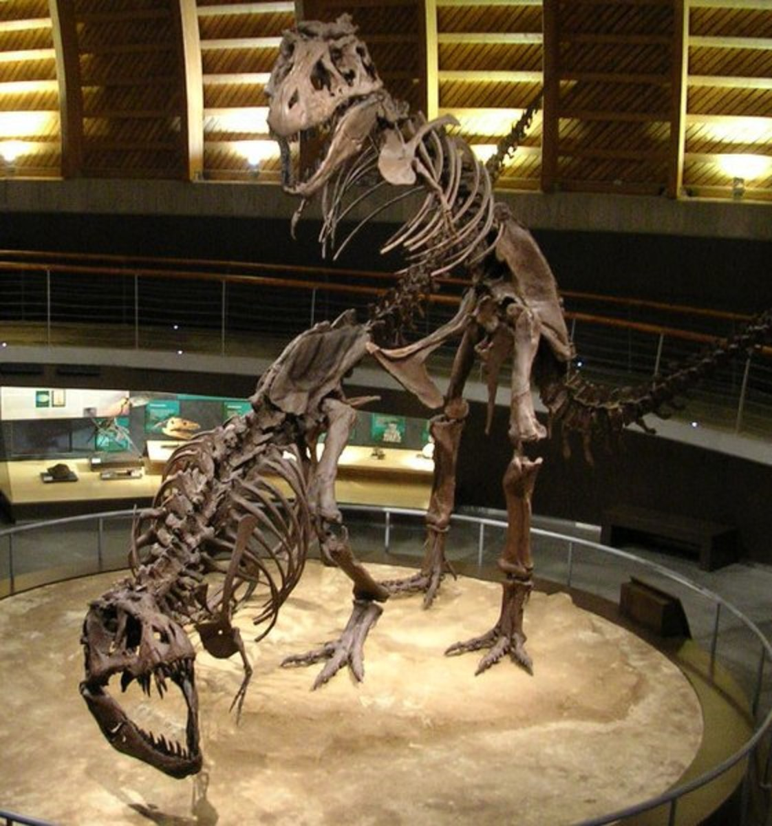 T-Rex skeletons in a mating position.