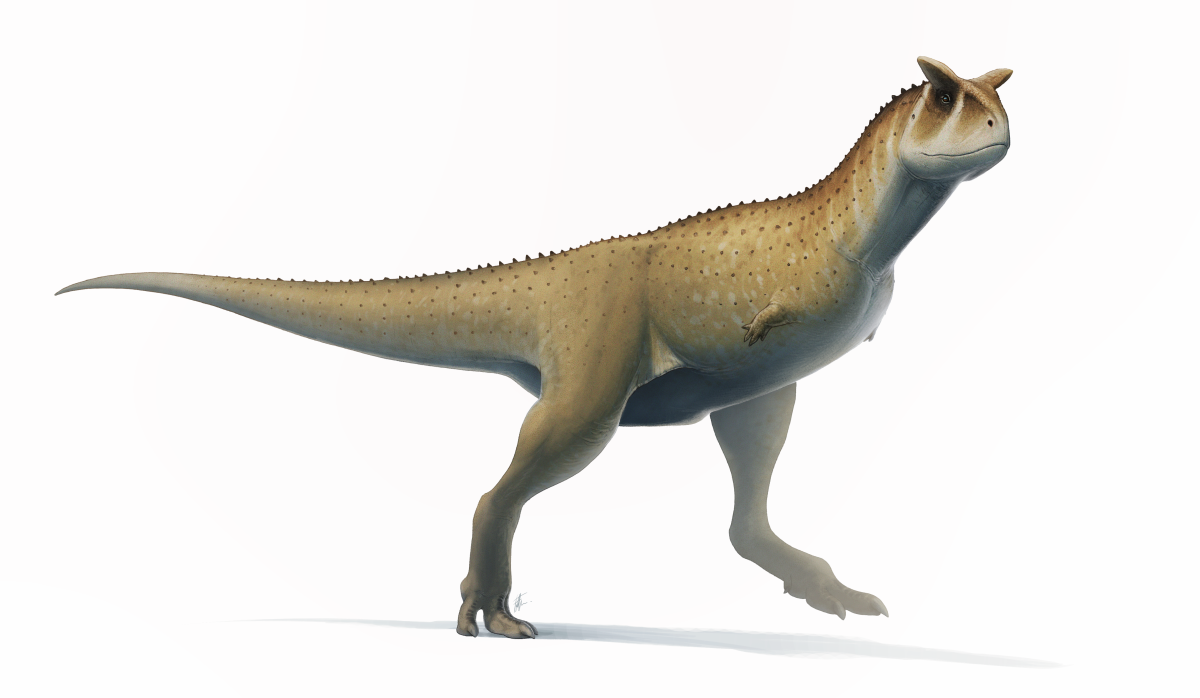 The Carnotaurus with vestigial arms.