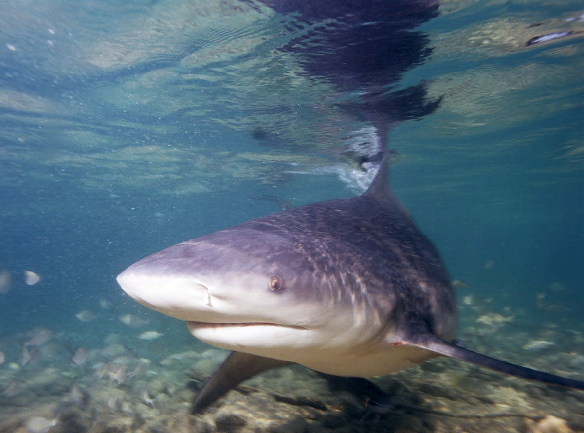 shark-terror-at-the-beach
