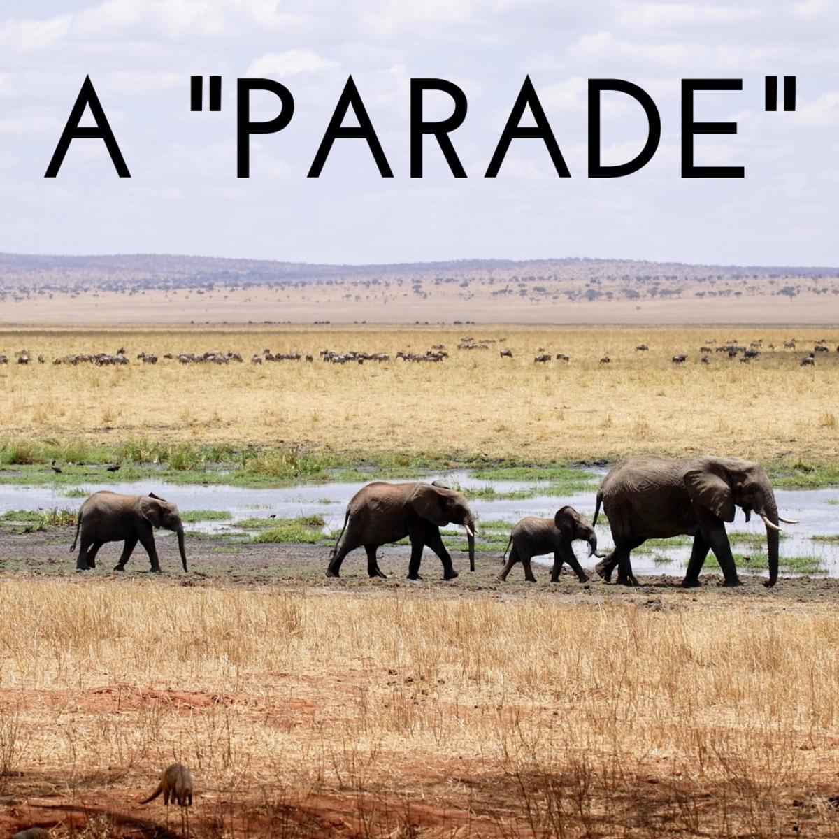 A parade of elephants.