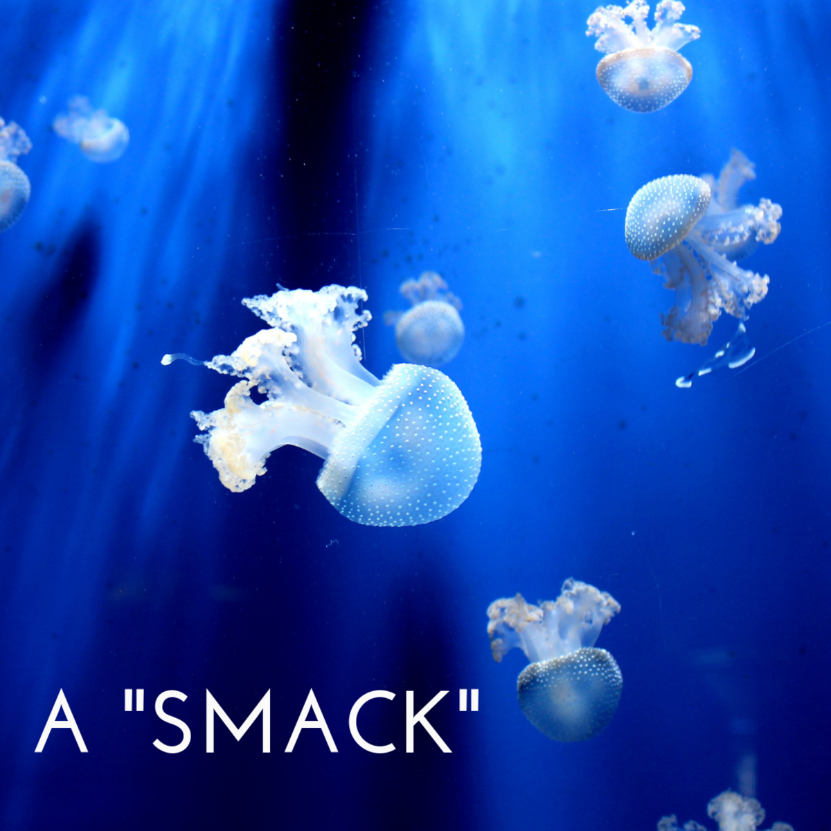 A smack of jellyfish.