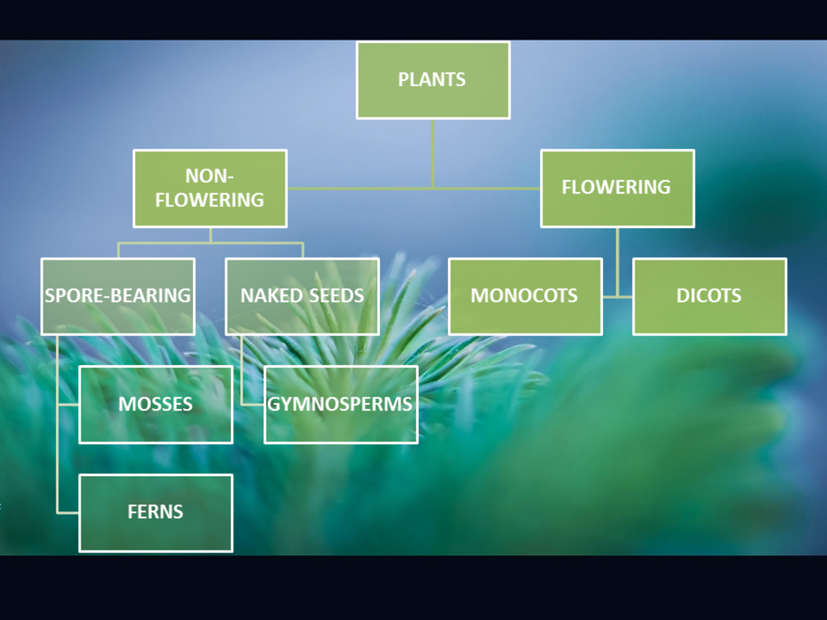 Diagram for the different types of plants
