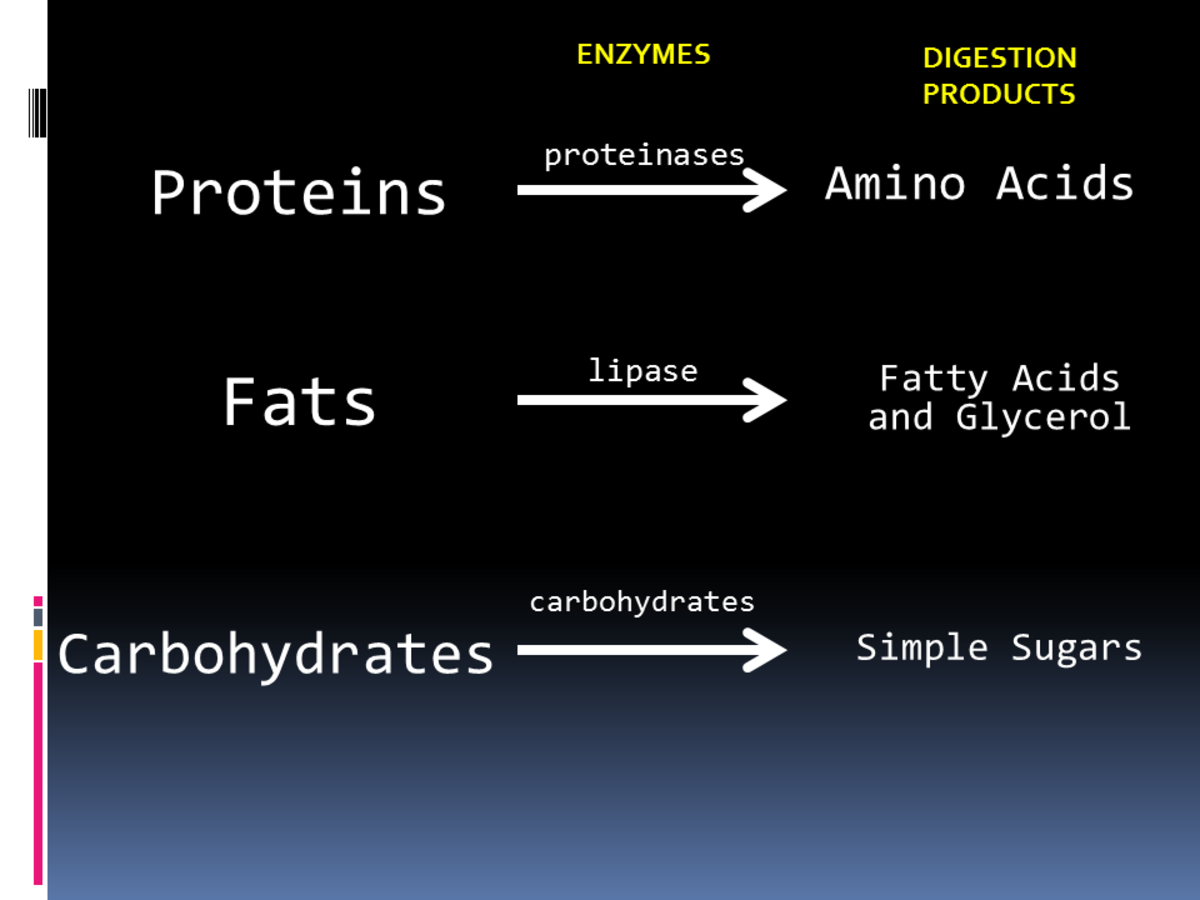 Chemical digestion in the presence of enzymes