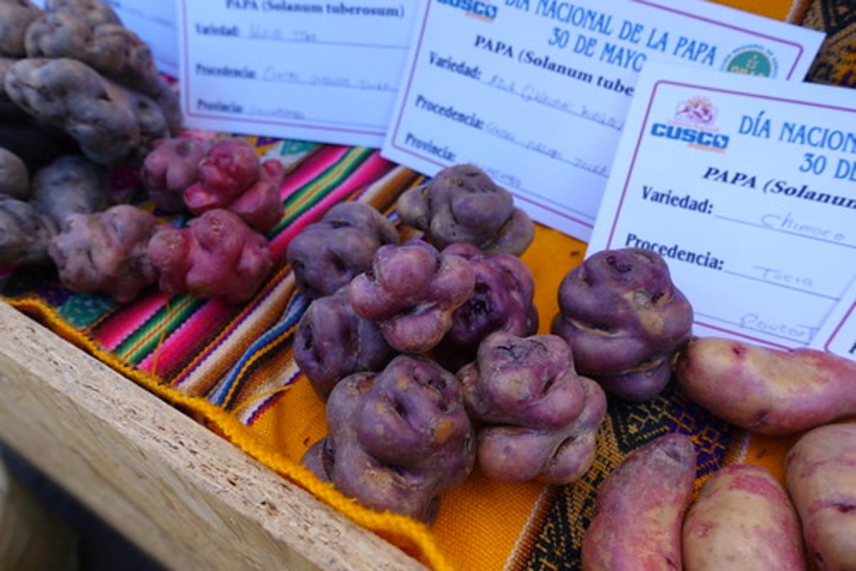Native Peruvian potatoes.