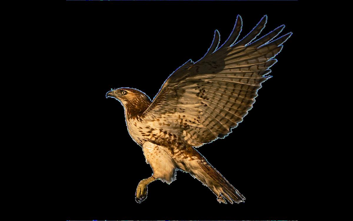 Hawk|Baaz|बाज