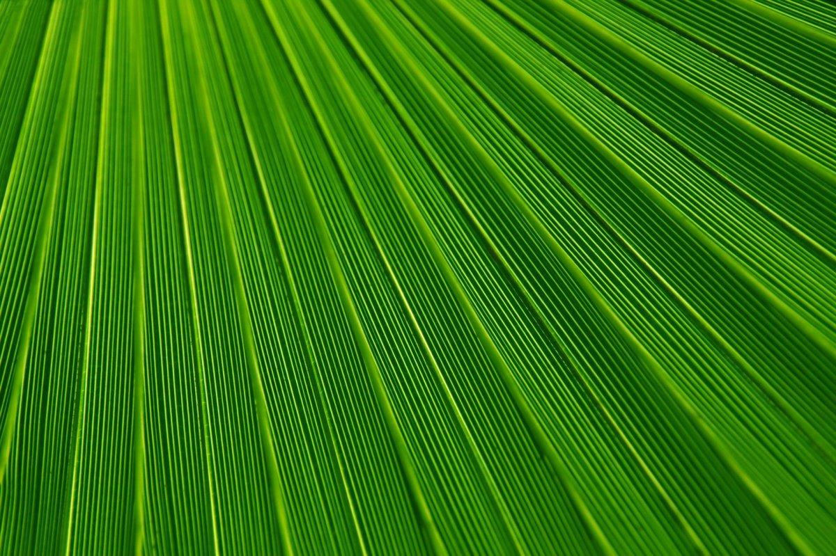 Green|Haraa|हरा
