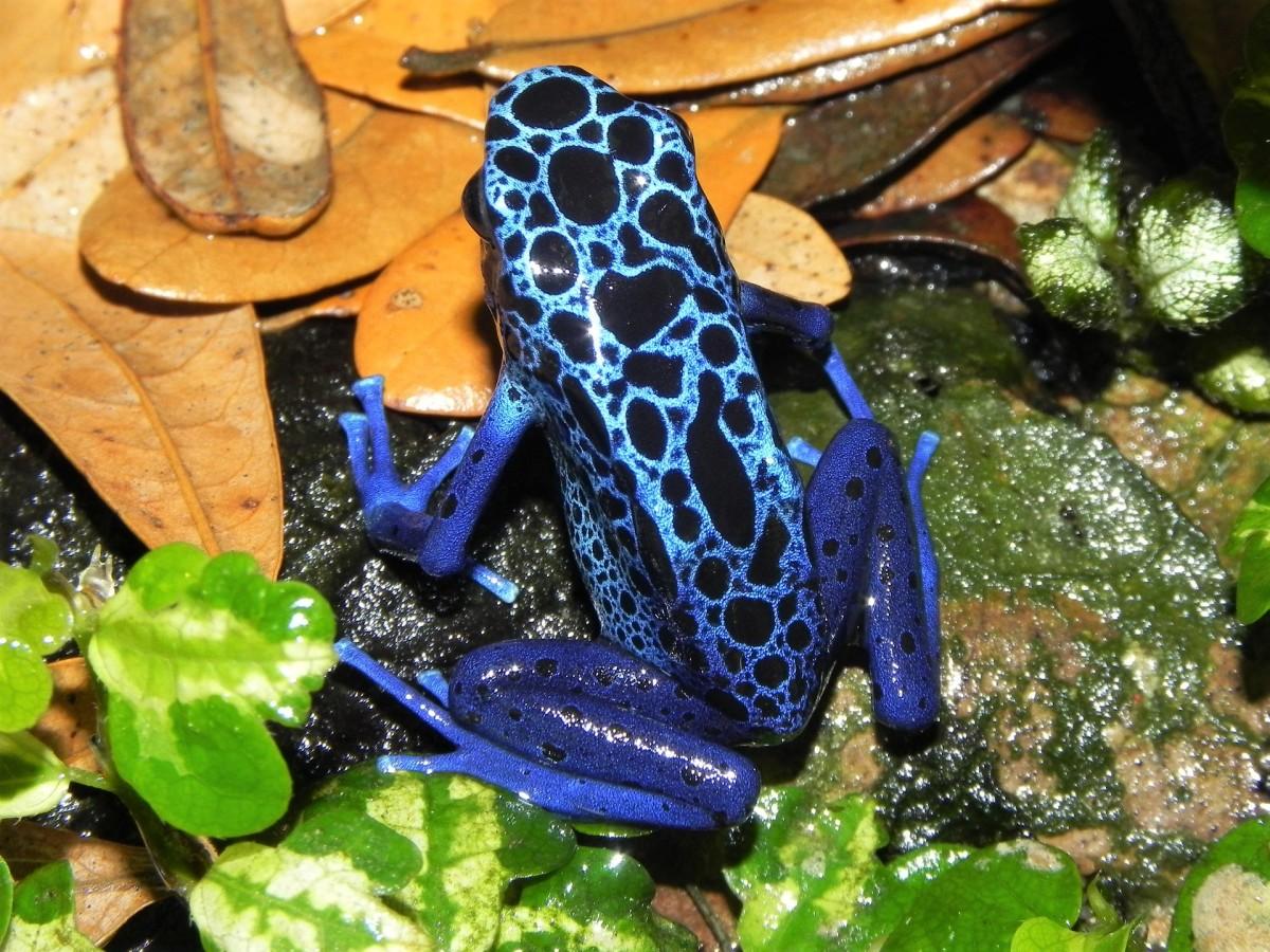 An attractive amphibian