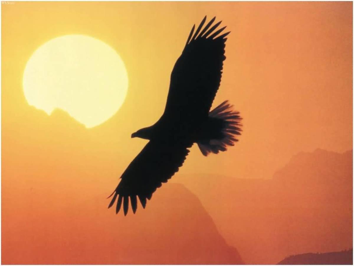 Ani Tsiskwa (Small Bird Clan or Eagle representing spirit)