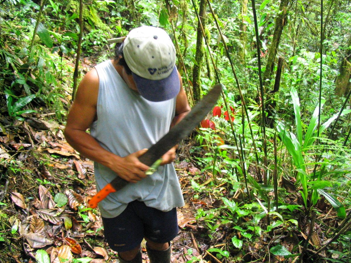 A machete is the most valuable tool in the rainforest.